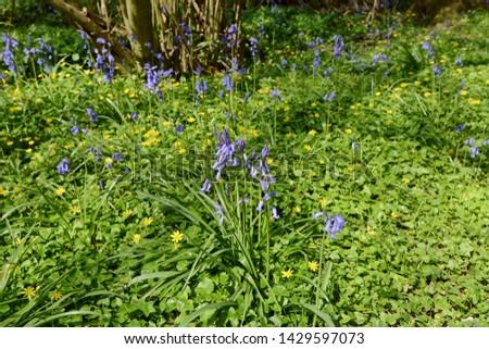Flores da primavera amarelo crescer madeira azul Foto stock © sarahdoow