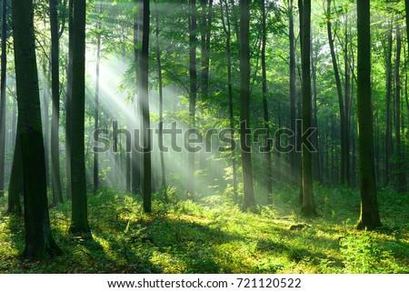 太陽光線 森林 夏 公園 木材 ストックフォト © cosma