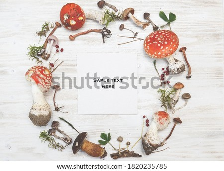 Amanita mushrooms Stock photo © AlessandroZocc