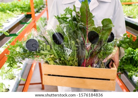 Packed fresh green leaves in wooden box held by young female agronomist Stock photo © pressmaster