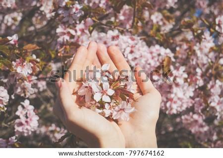 Sakura bloemblaadjes roze handen vrouw Stockfoto © ElenaBatkova