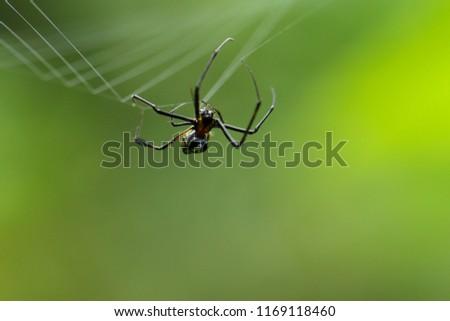 Pók háló kicsi tükröződések kert női Stock fotó © suerob