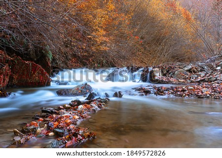 Autumn Colors Of A Waterfall In Transylvania ストックフォト © taviphoto