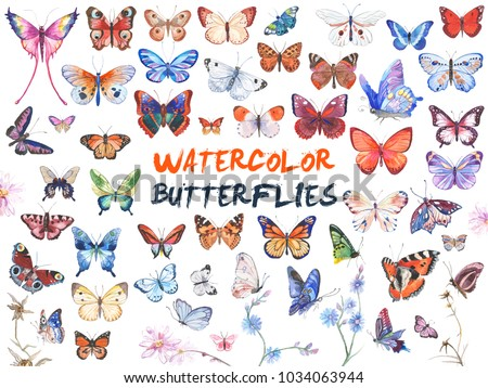 Colorfull butterfly Stock photo © milsiart