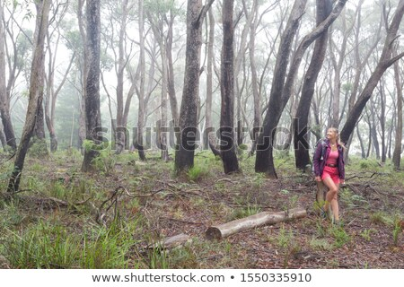 Positive woman hiking in forest of gums and eucalypts Stock photo © lovleah