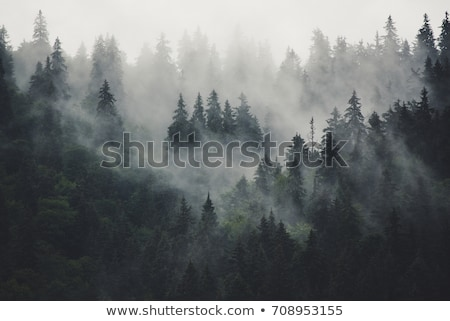 Green Hill Trees and Pine Trees Stock photo © bobkeenan