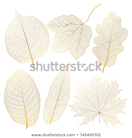 Altın damar yaprakları vektör ayarlamak altın Stok fotoğraf © beaubelle