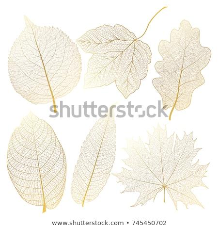 Gold vein leaves, vector set Stock photo © beaubelle