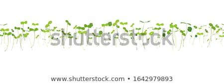 Micro verduras frescas negro saludable alimentos orgánicos Foto stock © olira