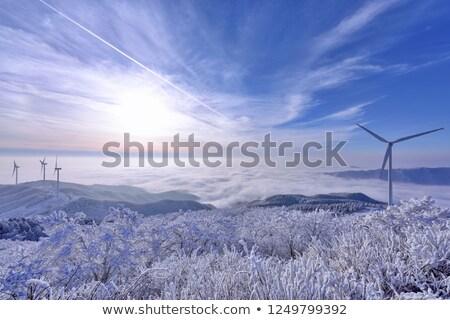 winter · rij · oranje · licht - stockfoto © njaj