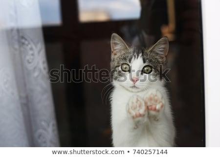Cat by window stock photo © xaniapops