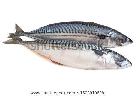 Сток-фото: два · скумбрия · свежие · рыбы · белый · океана
