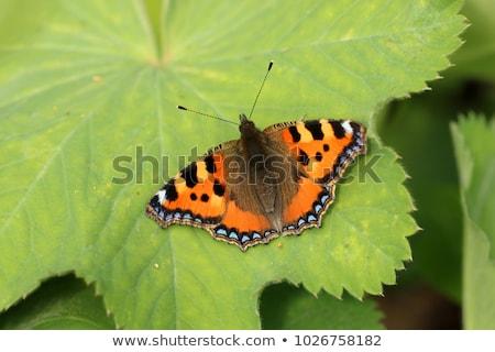 wenig · Schmetterling · farbenreich · orange · Tier - stock foto © stocksnapper