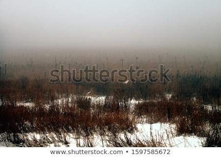 Focus · трактора · небе · весны · трава - Сток-фото © pictureguy