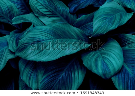 Foto stock: Art Abstract Nature Background Spring Greens