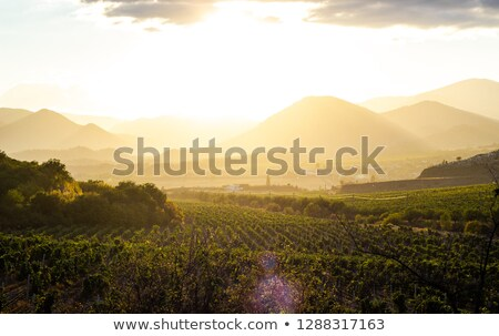 Grapevines in spring, Crimea stock photo © mariematata