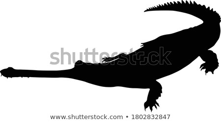 silhouette of gavial stock photo © perysty