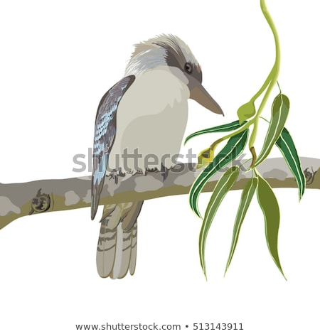 птиц австралийский камедь дерево Blue Sky копия пространства Сток-фото © byjenjen
