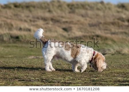 köpek · pençe · el · sarı · insan · eli · sevmek - stok fotoğraf © cynoclub