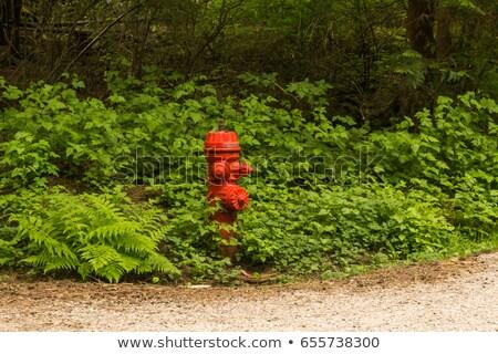 tűz · piros · helyi · park · fém · acél - stock fotó © tab62