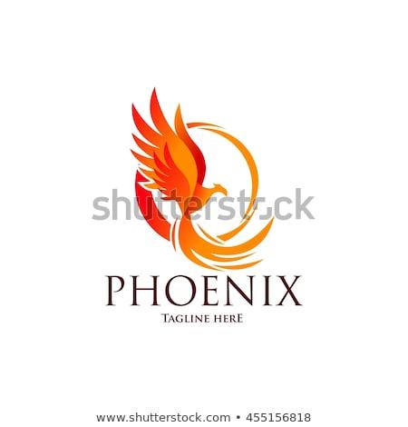 フェニックス 太陽 ホイール 画像 炎のような 鳥 ストックフォト © cteconsulting