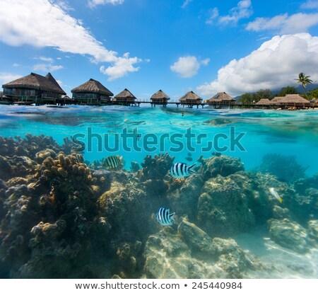 海岸線 · フランス語 · ポリネシア · サンゴ · 水 · 風景 - ストックフォト © TanArt
