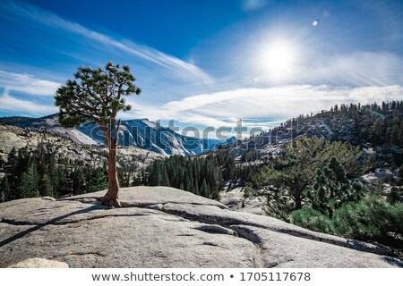 ストックフォト: 表示 · ヨセミテ · 谷 · ポイント · ヨセミテ国立公園 · ツリー