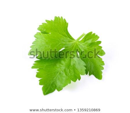Levél zeller friss izolált fehér étel Stock fotó © taden