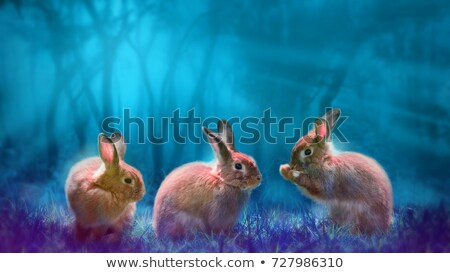 Horror bunny vector cartoon illustratie baby Stockfoto © ddraw