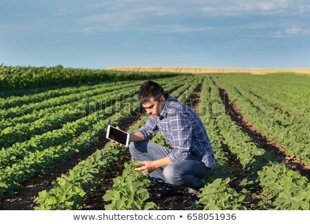 若い男 フィールド 小さな 農家 見える ストックフォト © Cursedsenses