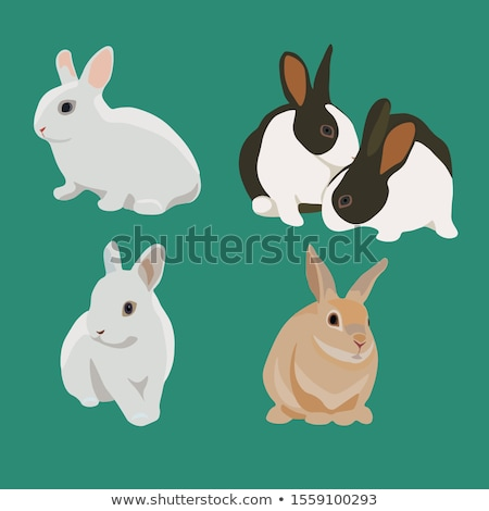 rabbit cartoon stock photo © aminmario11