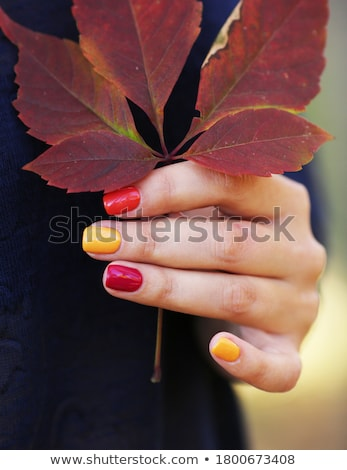 Lady's Manicured Hands Stock photo © fouroaks