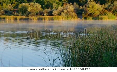 日の出 明るい 表面 湖 空 水 ストックフォト © shihina