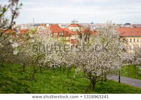 Tepe çiçekli bahar park Prag çiçekler Stok fotoğraf © CaptureLight