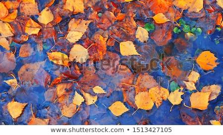 őszi · színek · fák · piros · citromsárga · erdő · bézs - stock fotó © billperry