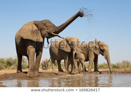 elefantii · apa · potabila · african · parc · Namibia · apă - imagine de stoc © artush