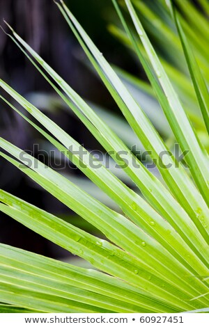 detail of leave, Everglades National Park, Florida, USA Stock photo © phbcz