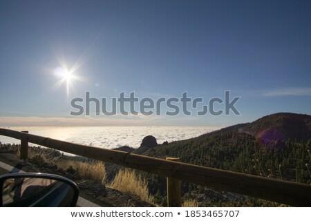 Arid climate of Tenerife. Canary Islands. Spain Stock photo © amok
