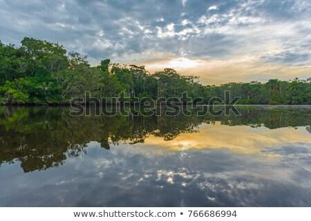 Symmetrie rivier zonsopgang reflectie ochtend boom Stockfoto © CaptureLight