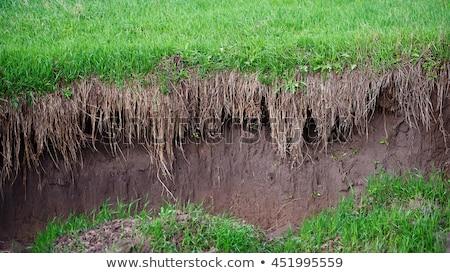 suelo · erosión · imagen · suelo · desierto · muchos - foto stock © alinamd