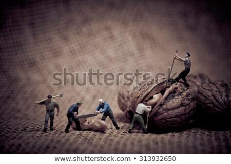 Miniatuur werknemers walnoot kleur macro foto Stockfoto © Kirill_M