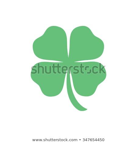 Shamrock sok spirál egyezség Szent Patrik napja irodaszer Stock fotó © madelaide