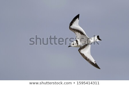 Ninho natureza pássaro tempo pedra ilha Foto stock © Arrxxx