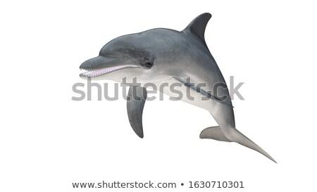 Geven dolfijn vis natuur oceaan leven Stockfoto © Paha_L