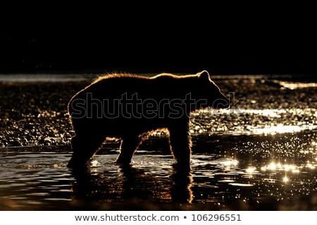 Zonsondergang wildernis zwaan meer wildlife Stockfoto © wildnerdpix