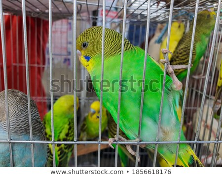 Beautiful Parrot sitting in a hole Stock photo © Klinker