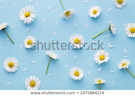 Flor camomila menina preto blusa palms Foto stock © dmitroza