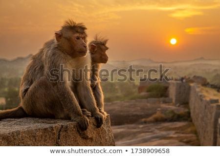 Two monkeys Stock photo © bluering