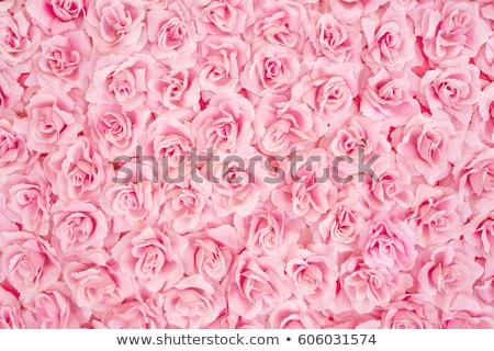 аннотация · романтические · розовый · роз · цветы · капли · воды - Сток-фото © artjazz