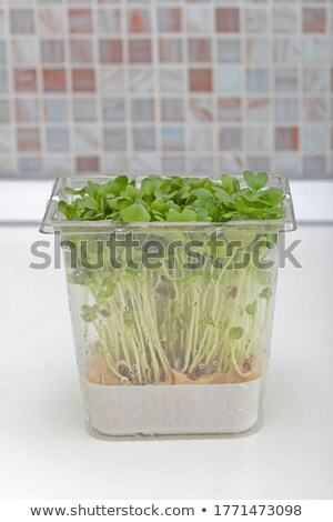 Fresh edible healthy watercress in the box . Stock photo © user_11224430